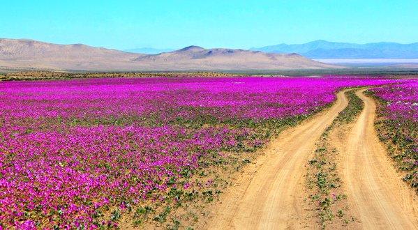 Il deserto Atacama, visto Fiorito.