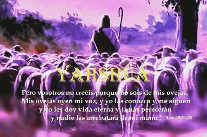 Yahshua è il nostro Pastore