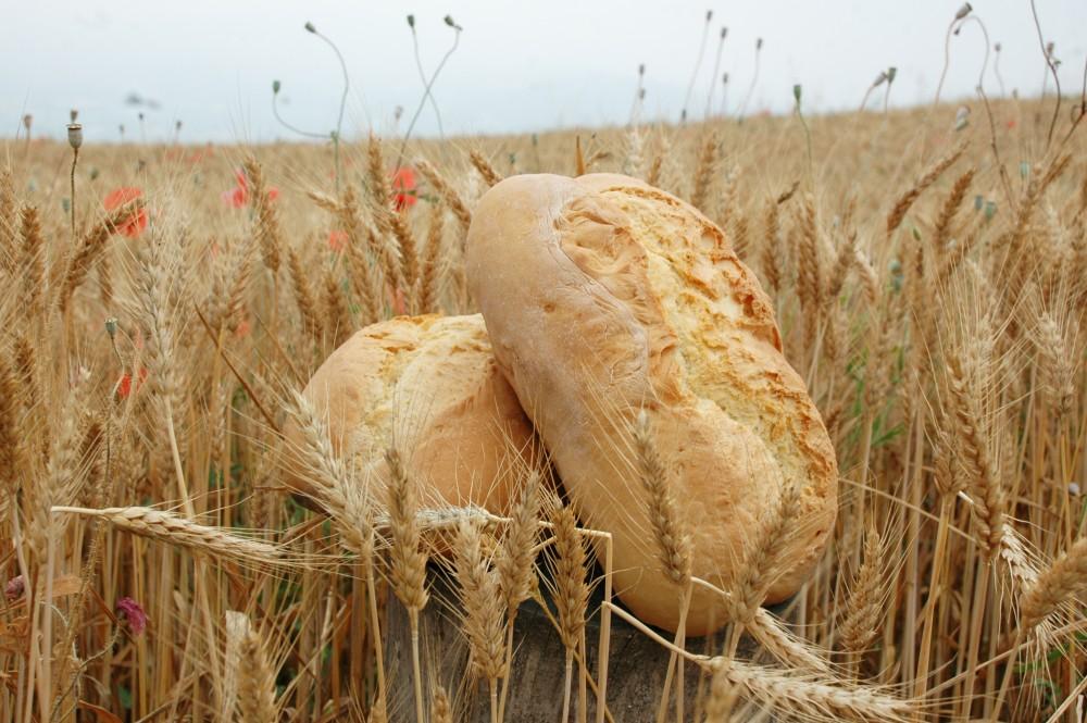 grano e zizzania