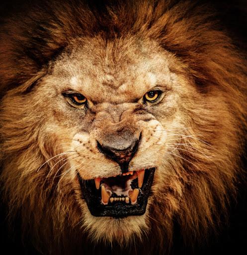 Leone ruggente, il diavolo